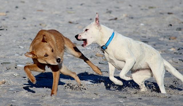 un chien mord un autre chien